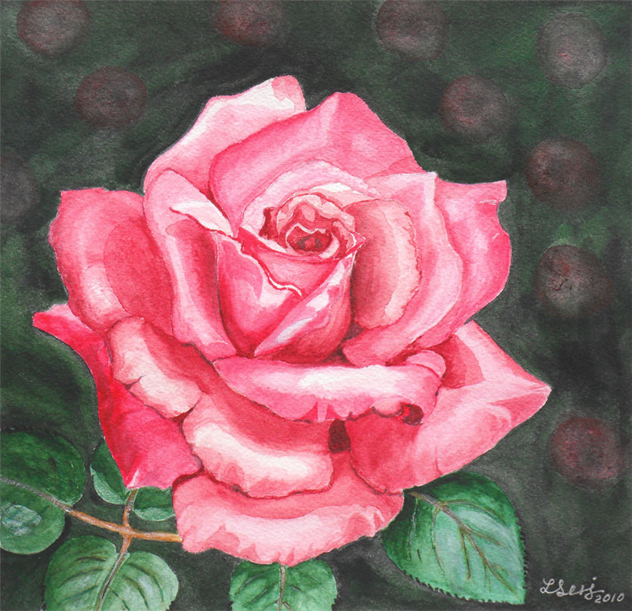Lilys watercolor paintings wondrous pink rose wondrous pink rose mightylinksfo